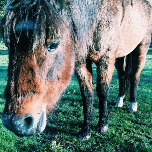 caresser - chevaux