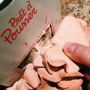 recolte - champignon - pret a pousser